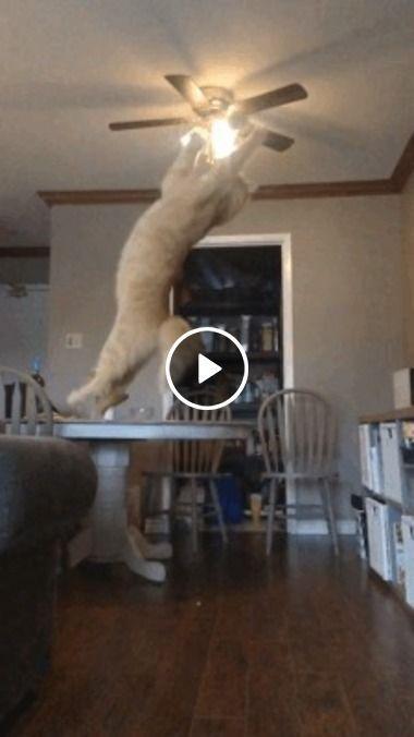 Gato querendo pegar a  bolinha