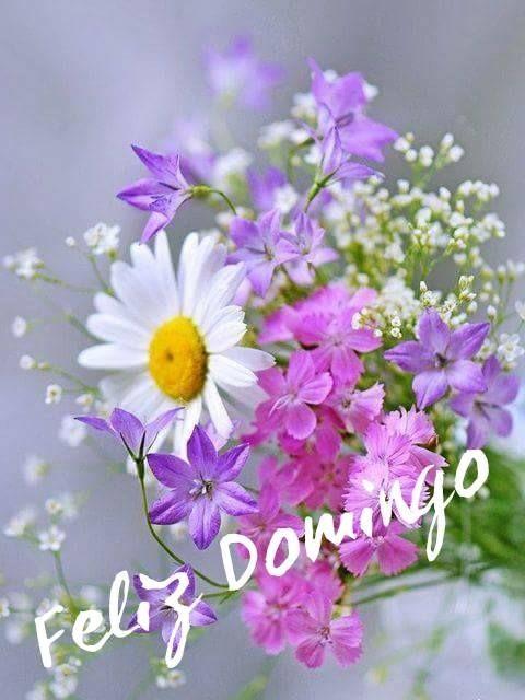 BIENVENIDO DOMINGO- FELIZ DOMINGO | Imágenes para whatsapp