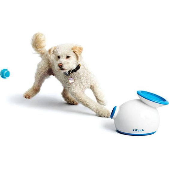 The iFetch Automatic Ball Launcher for Dogs
