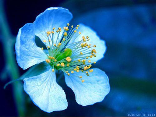 ɛïɜ Flower ɛïɜ