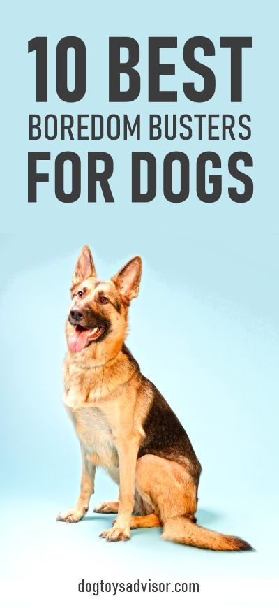 Is Your Dog Bored Here S 10 Toys To Keep Your Dog Busy