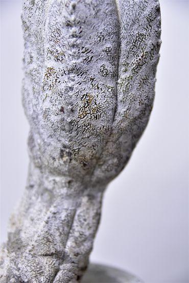 Astrophytum myriostigma 'Onzuka' v.