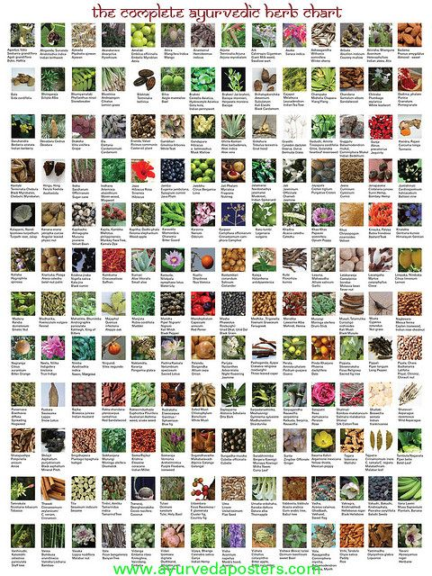 my new Ayurvedic herbal chart, 168 herbs with Sanskrit, Latin and ...