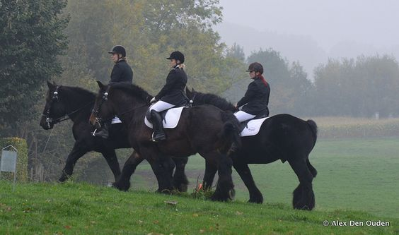 English, Belgian draft horses and To find out on Pinterest