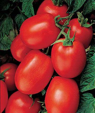 Health Kick Roma Tomato