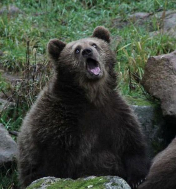 17 φωτογραφίες ζώων που πιάστηκαν σε εντυπωσιακά αστείες στιγμές