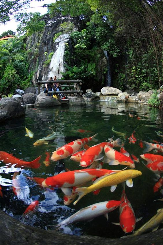 Clean healthy and blue water can be achieved with for Japanese garden with koi pond