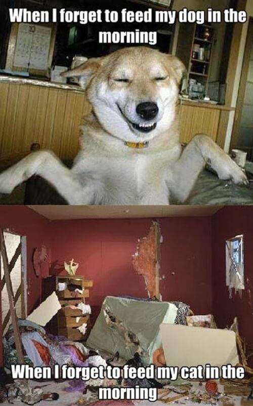 Dog Care Clinic E V Meme Und Livie