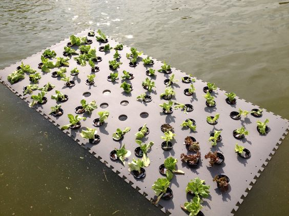 Pond planter floaters wetland plants this floating for Fish pond hydroponics