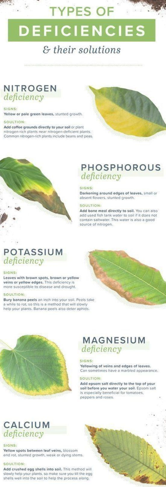 Homemade Plant Food And Plant Deficiencies Homemade Plant Food Plant Deficiencies Plants