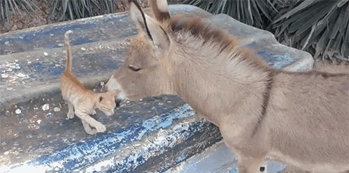 GIF: Let's Be Friends, Donkey