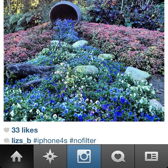 Picture by my friend & fellow photo @lizs_b on #instagram. Really like the idea of redoing the drainage bed with mix of river rock + river-friendly flowers that also tolerate drought conditions. Anybody have suggestions on some flowers or plants that meet this criteria???