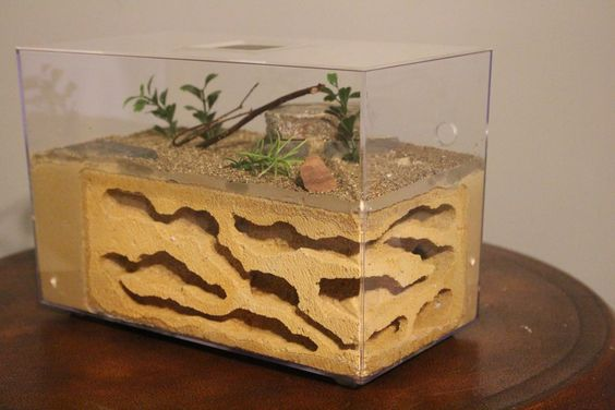The Pinnacle!  Famous in it's own right, this is one of our best ant habitats available at www.tarheelants.com