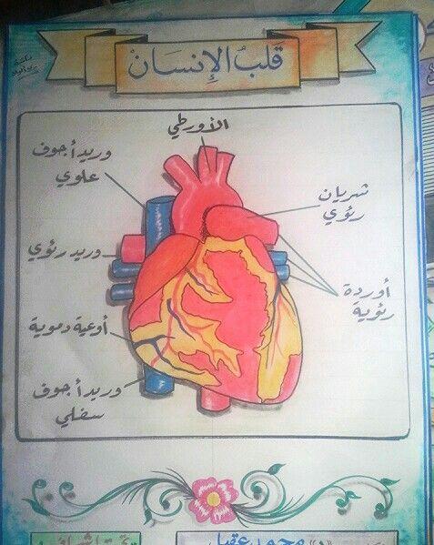 Pin By Raghad On علوم Human Body Activities Activities Bullet Journal