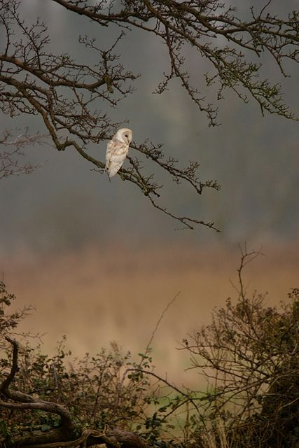 But the owl lost interest and soared up into the oak trees along the drive.  ADoW page 133