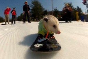 Little snowboard dude