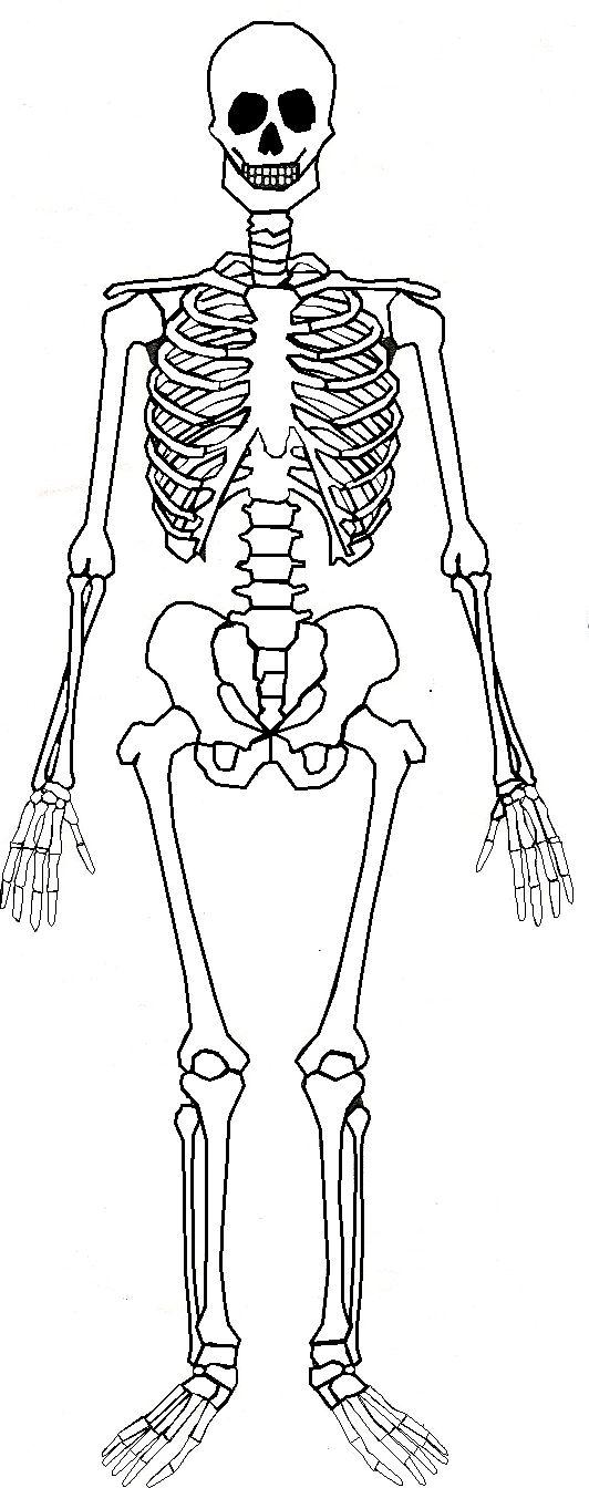 montessori workjobs: montessori nomenclature FREE human skeleton 3 part cards & book