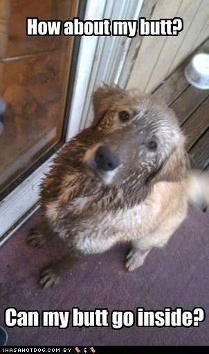 Happy Mud Season! @Rebecca Reynolds