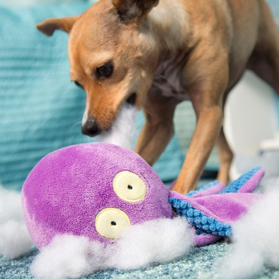 Odd Ollie The Octopus Dog Toys Cute Dog Toys Royal Animals