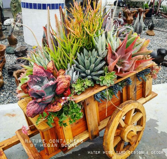#naturecontainers #waterwise #succulent #cactus #cacti #succulents #succulentcontainers #succulentlandscape #succulentlove #succulove #succulenttapestry #succulentarrangement #flowers #containergarden #containerarrangement #flowerarrangment #weddingflowers #containergarden #garden #gardens #landscaping #landscape #droughttolerant #patio #plants #landscape #containerdesign #smallgarden #vintage #gardenart #repurposed #recycle #meganboone