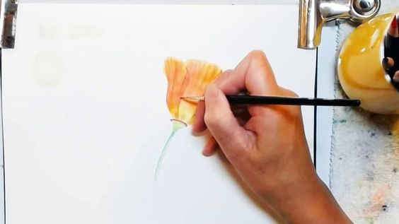 Painting A Watercolor Pencil Poppy on Vimeo