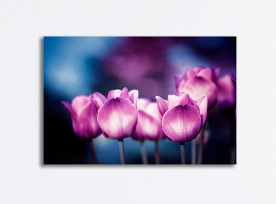 "Flower Canvas Gallery Wrap - tulip photography dark blue pink purple black gallery wrapped canvas floral art print nature decor, ""Mesmerize""..."