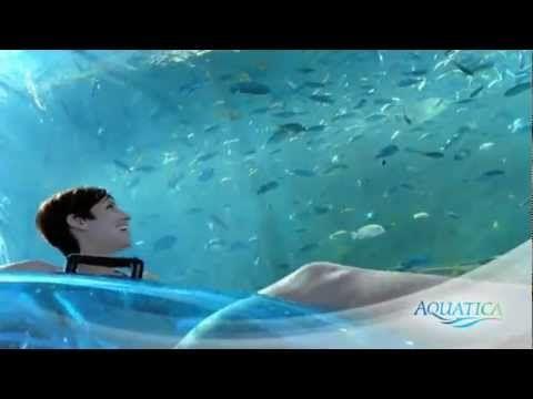 Com o calor desse verão em Orlando, você deve mergulhar literalmente nas atrações do Parque Aquatica! #Aquatica #SeaWorld