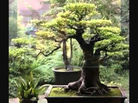 japanese gardens meditation and meditation videos on. Black Bedroom Furniture Sets. Home Design Ideas