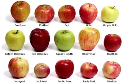 Many types of Apples.  They are all delicious.  There are 3 varieties of Apples that grow well in Gainesville, Florida - Anna, Dorsett, and Ein Shemer.  Yes, Apples can grow in subtropical Florida.  www.GainesvilleFloridaHomes.com