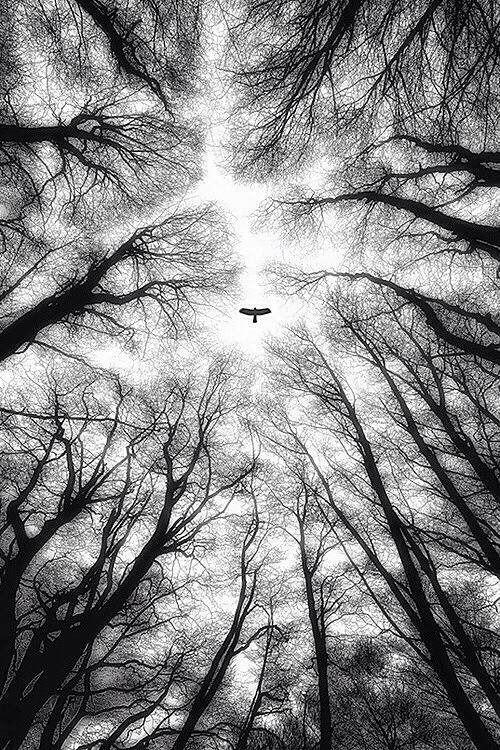 Image de l'aigle et de Dieu