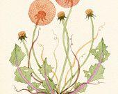 Dandelion Wild Flower 12 x 16