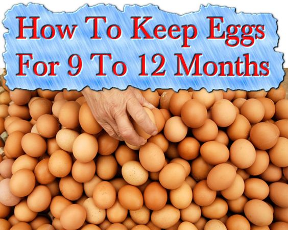 How to Preserve Eggs for the Long-Term   Survival Sullivan