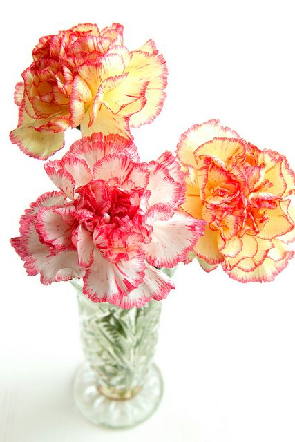Gorgeously cheerful hot pink tinged carnations. #carnations #flowers #pink #vase #arranged #arrangement #spring #summer: