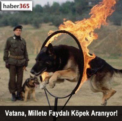 Vatana, Millete Faydalı Köpek Aranıyor!