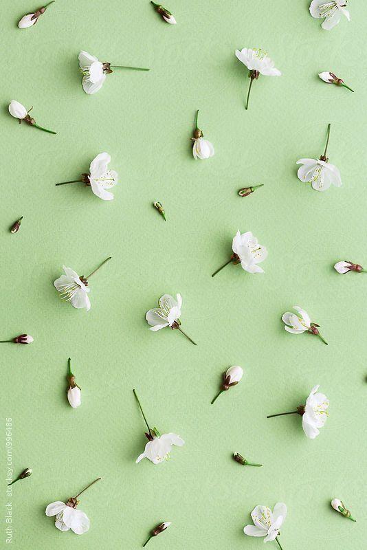 قرب العيد Flower Phone Wallpaper Flower Wallpaper Floral Wallpaper