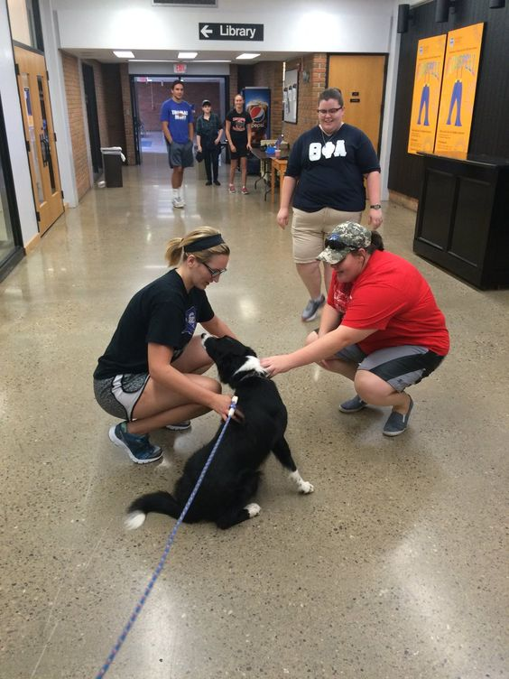Our campus dog meeting students in the halls!