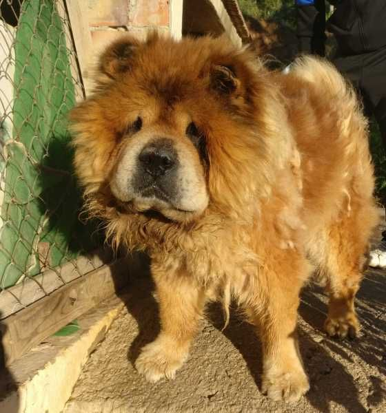 Everyone Loves A Happy Ending And In The Case Of Leo The Chow