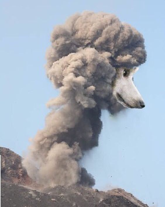 Poodle Explosions