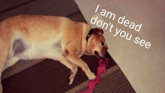 Non dog