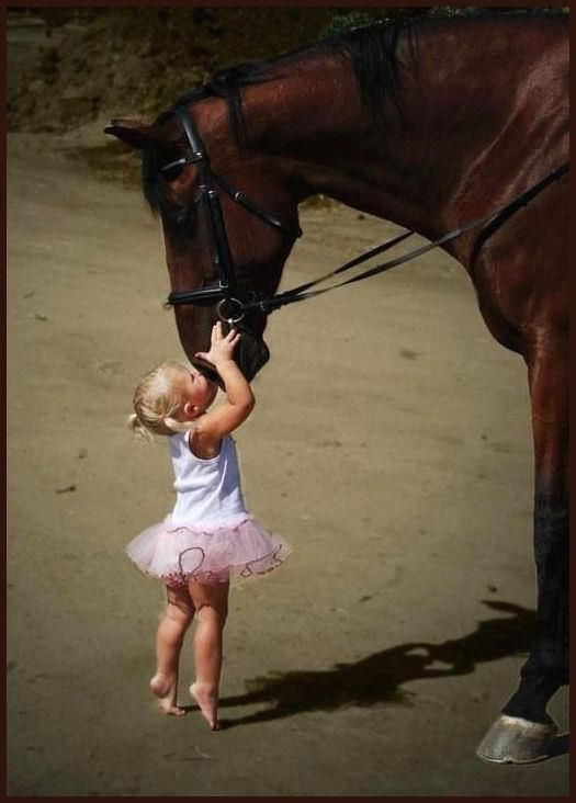 I don't even like horses but this is really cute: