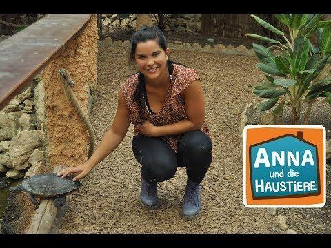 Schildkroten Information Fur Kinder Anna Und Haustiere Youtube Haustiere Schildkrote Landschildkroten Haltung