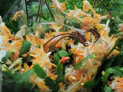 expo flores de holambra em salvador flores de maio