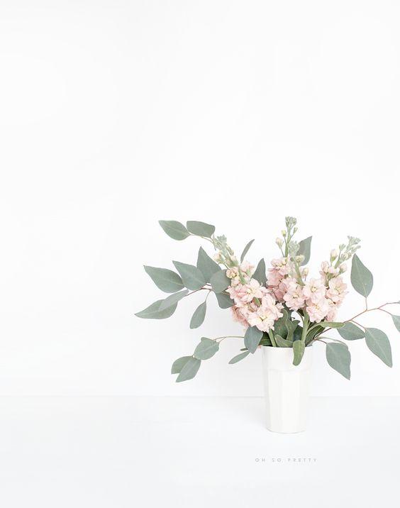 //Fresh Blooms//