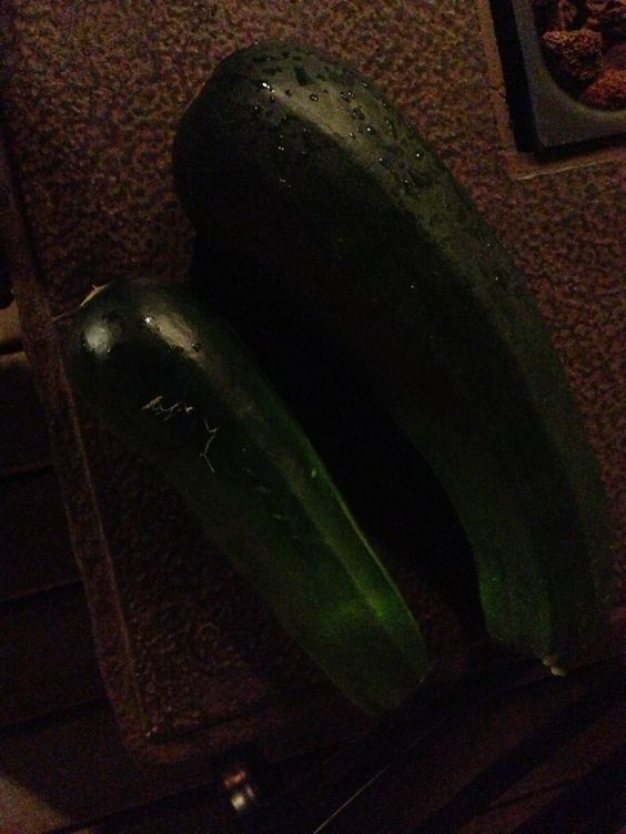 More zucchini. Cannot believe all I have picked.