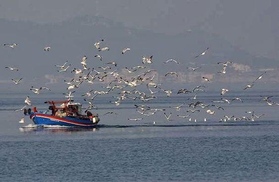 Greece...fishing boat