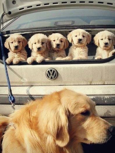 Mom and pups off on an outing