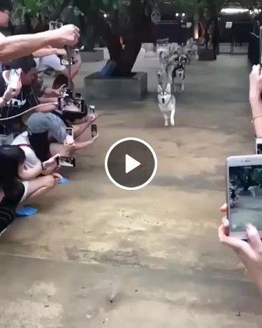 Competições incríveis Corrida de cachorros