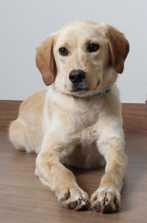 This Cutie Needs A Home Spaniel Mixed Medium Coat In Minnetonka Mn Dog Pets Pet Adoption Petsnearme Pet Adoption Pets Dog Adoption