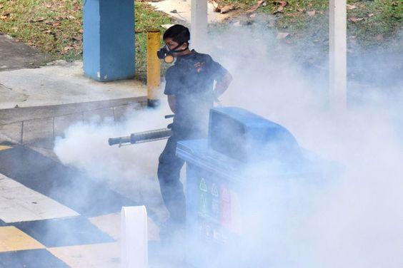 #Los mosquitos pueden transmitir zika a sus huevos - El Nuevo Diario - El Nuevo Diario • Nicaragua: El Nuevo Diario • Nicaragua Los…