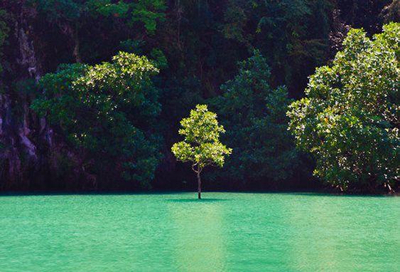 Green Aroma